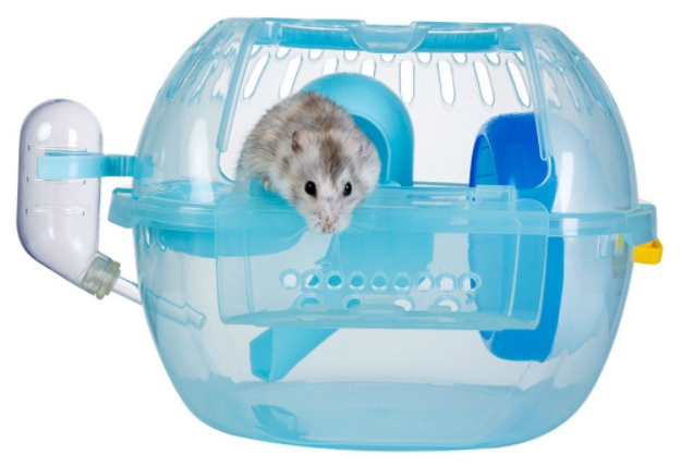 dwarf hamster in travel cage