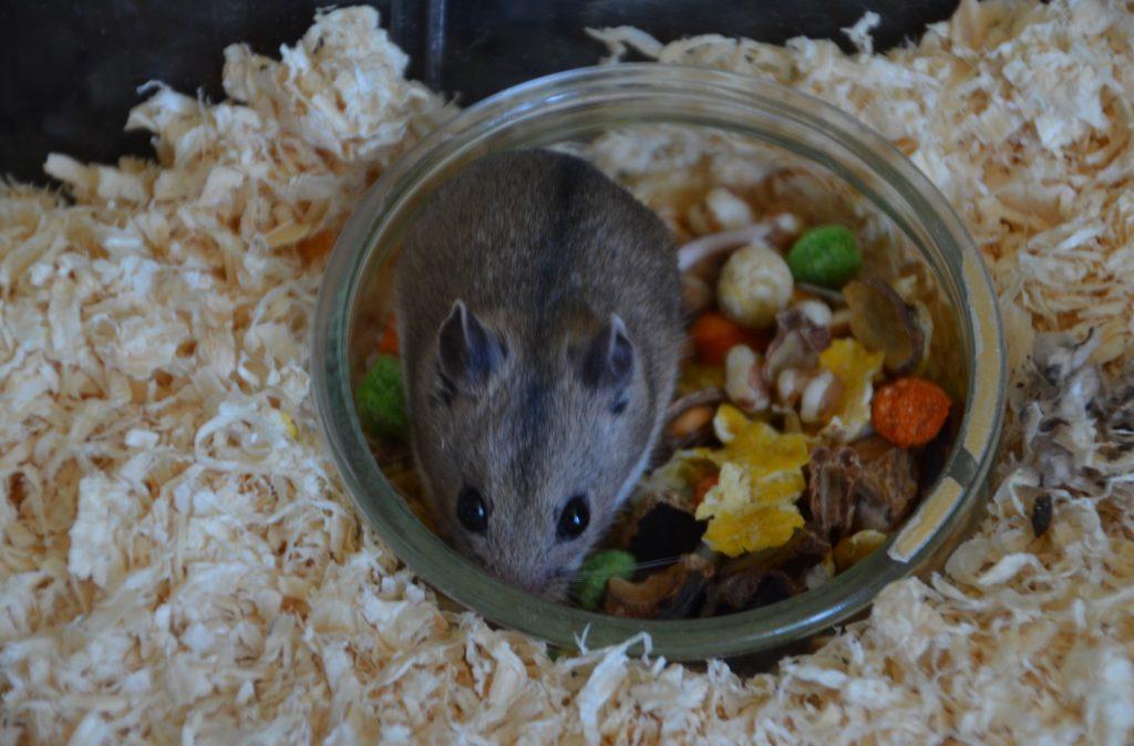 hamster food bowl